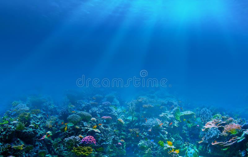 Underwater coral reef seabed background. With sun beams