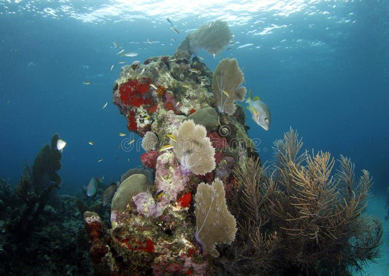 Download Underwater Coral Scene With Fish, Roatan, Honduras Stock Photo - Image: 19189876