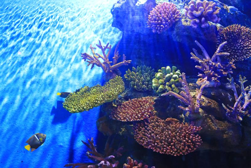 Underwater corals reef sea view in aquarium tank royalty free stock image