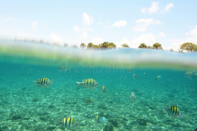 Underwater del pesce e palme al disopra della superficie immagini stock libere da diritti