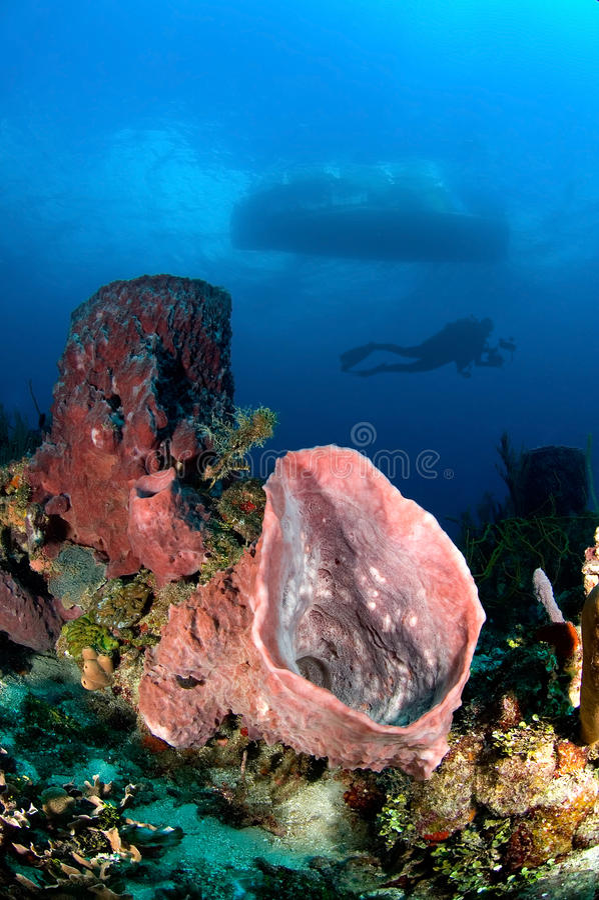 Underwater Exploration Royalty Free Stock Image