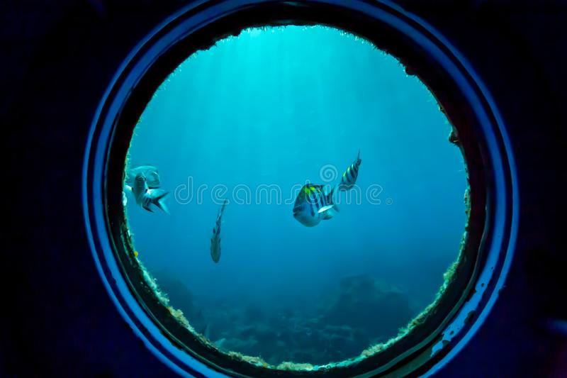 Underwater fish in coral reefs royalty free stock image