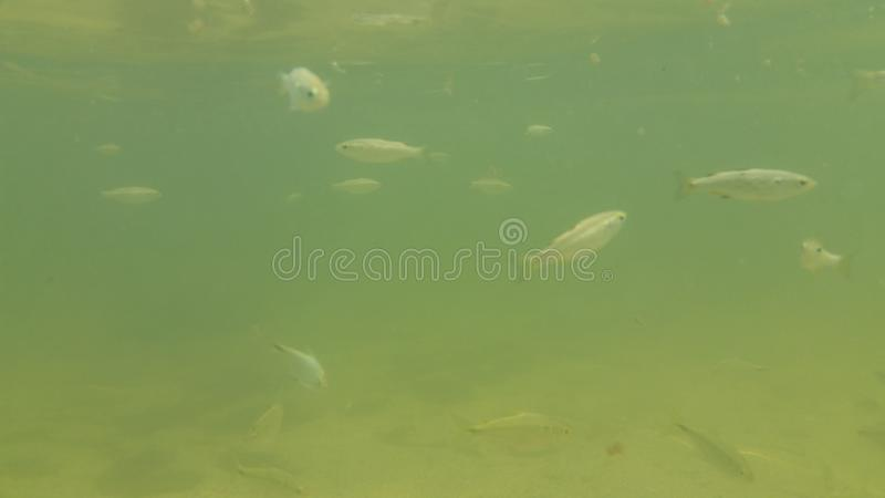 Underwater Fish royalty free stock images