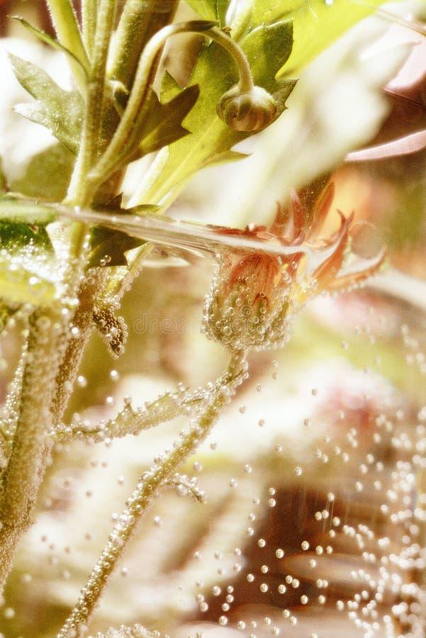 Free Underwater Flower Stock Photo - 11001510