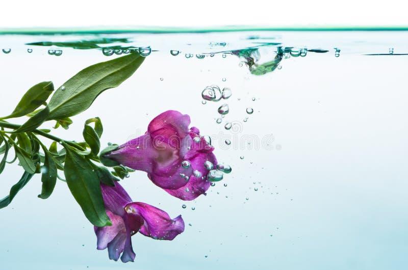 Underwater flower royalty free stock photo