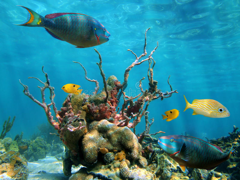 Underwater form and sea life stock images