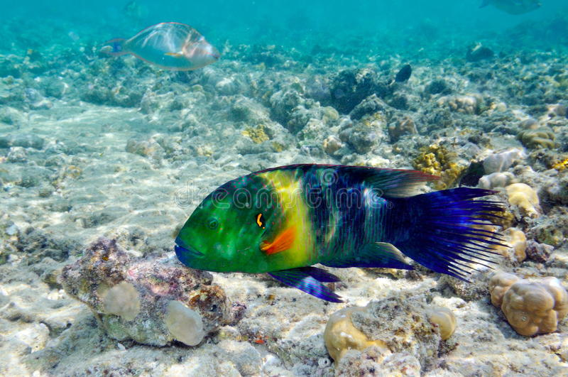 Download Underwater Image Of Tropical Fish Stock Image - Image: 14349771