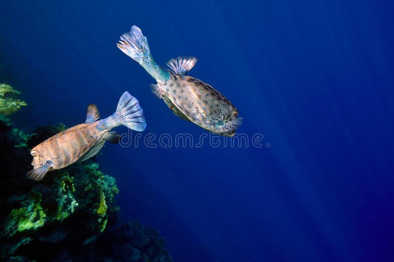 Download Underwater Image Of Tropical Fishes Stock Image - Image of reef, ocean: 14349697