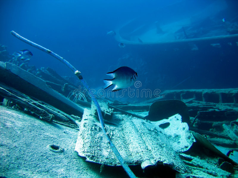 Download Underwater landscape stock image. Image of diving, landscape - 2812271