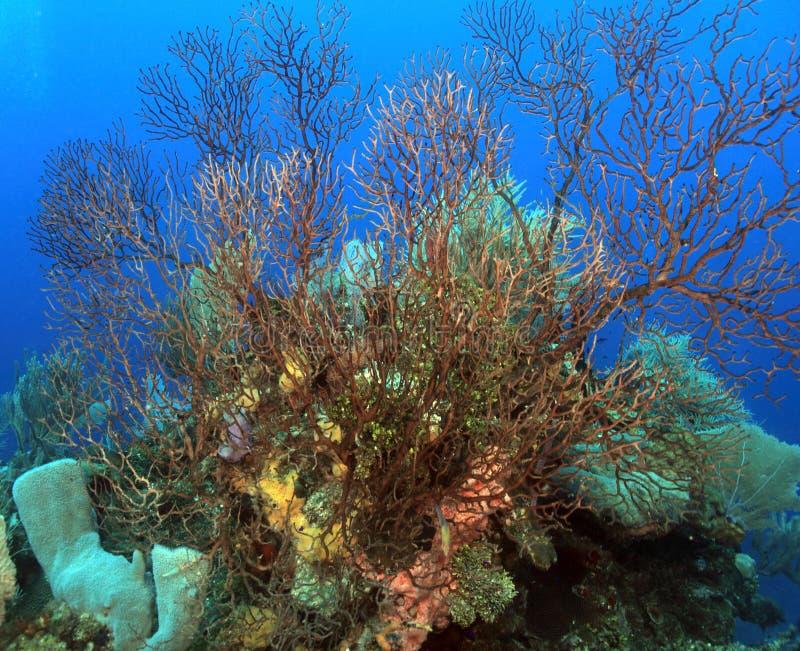 Underwater Landscape Royalty Free Stock Photo