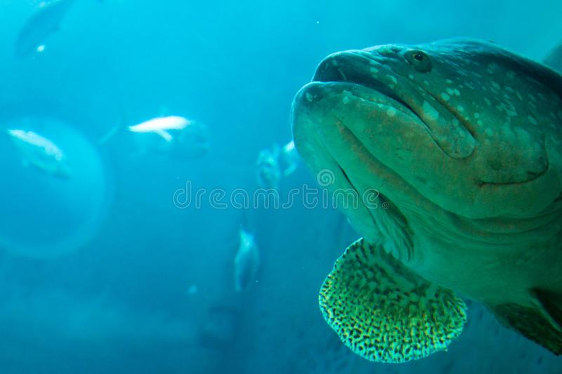 Underwater landscape background of big fish in the deep blue ocean royalty free stock photos