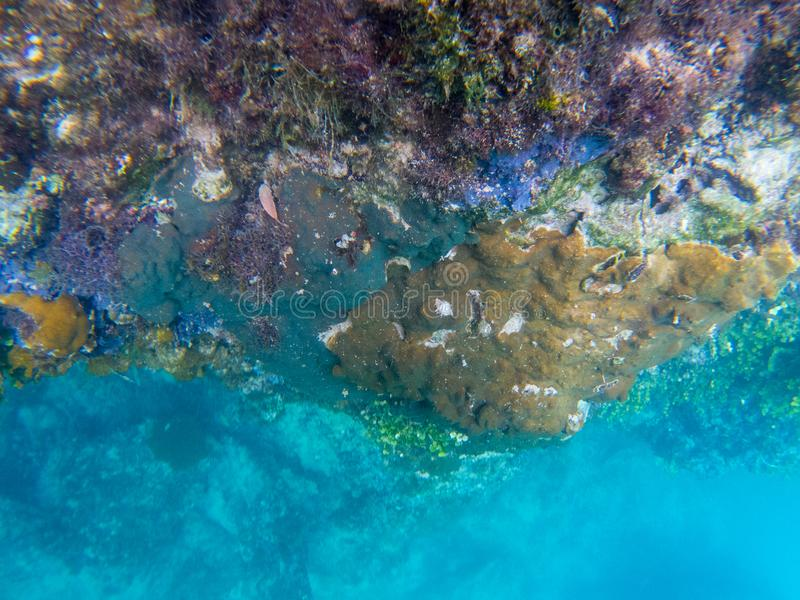 Underwater landscape with coral wall and deep blue sea water. Diverse coral on underwater stone. Coral on cliff undersea royalty free stock photo