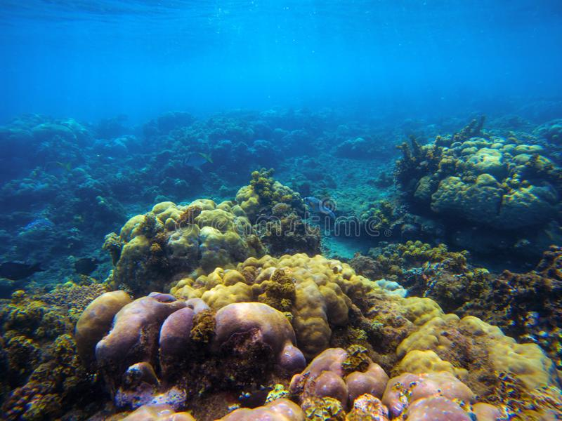 Underwater landscape with corals and sunlight. Tropical seashore undersea photo. royalty free stock photography