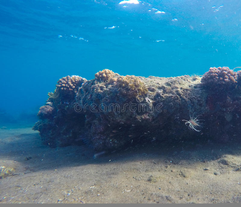 Underwater landscape with huge rock and sand bottom. Natural scenery in tropical sea stock image