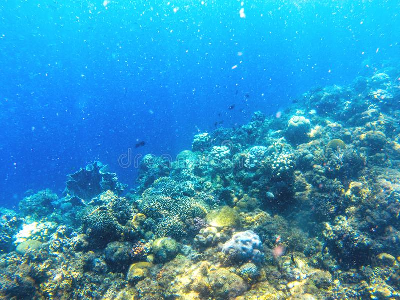 Underwater landscape with tropical fish and coral reef. Oxygen bubbles in blue seawater. Marine animals in wild nature stock photos