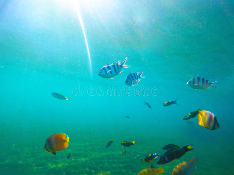 Underwater landscape with tropical fishes. Sunny undersea scene with coral fishes. stock images