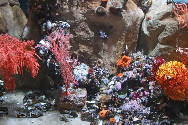 Underwater life stock photo