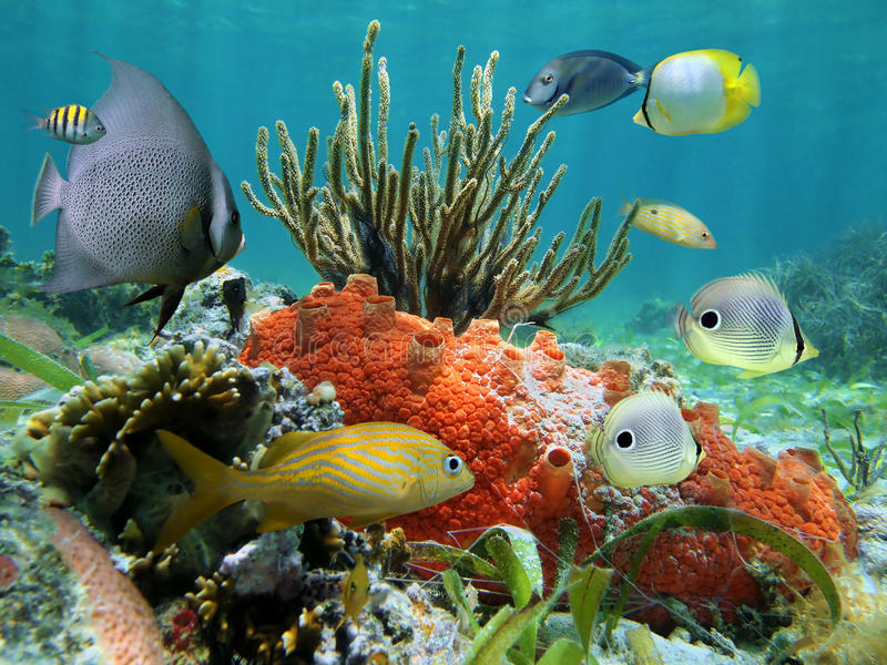 Underwater life of a coral reef royalty free stock photography