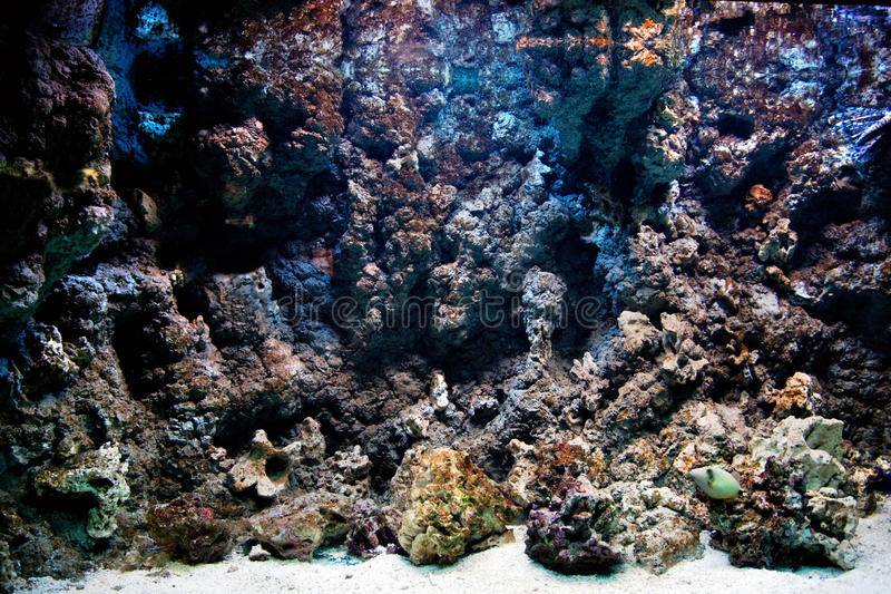 Download Underwater Life, Fish, Coral Reef Stock Image - Image: 21489361