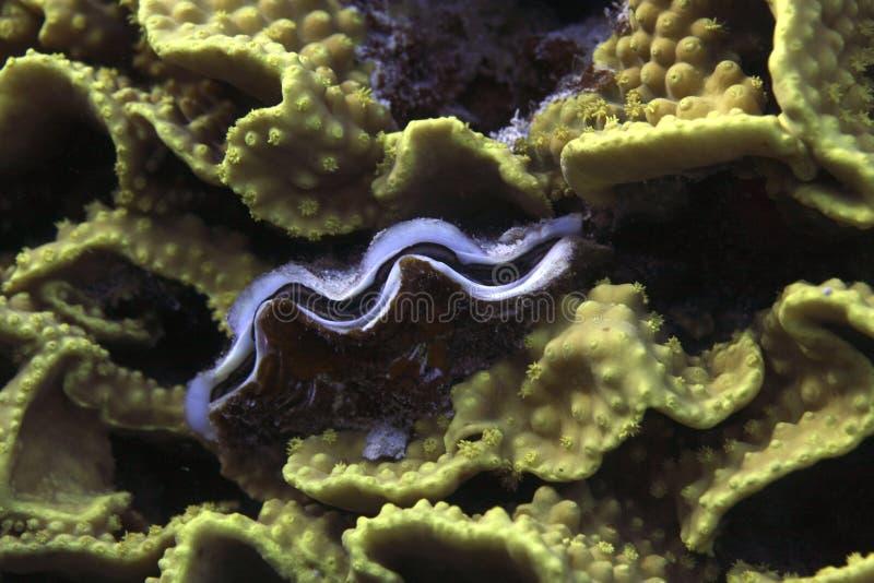 Underwater life - Giant & coral stock photos