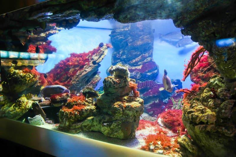 Underwater. Life in L'Aquarium de Barcelona or Aquarium of Barcelona - Spain stock image
