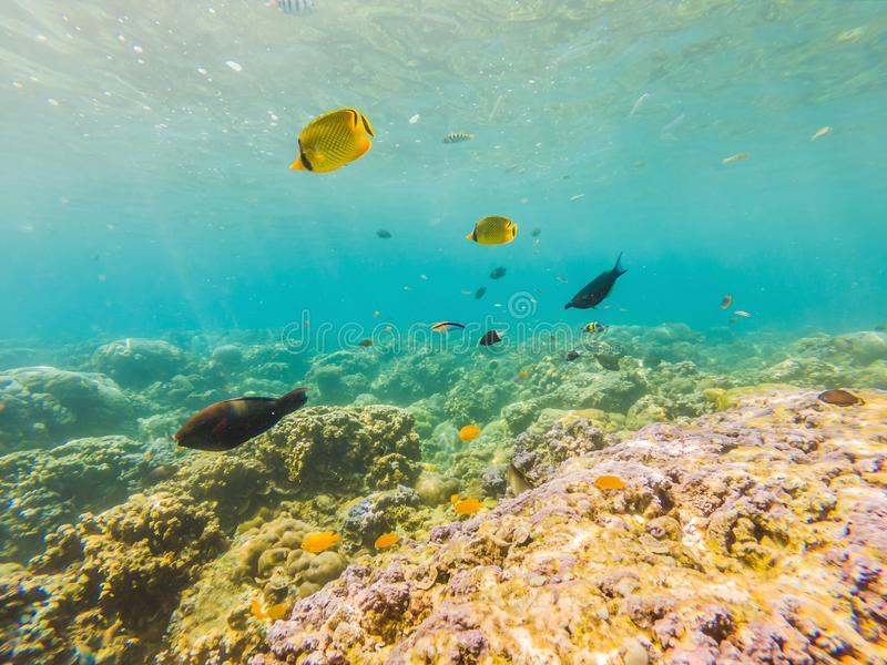 Underwater life landscape. Fish shoal at coral reef ocean underwater royalty free stock photo