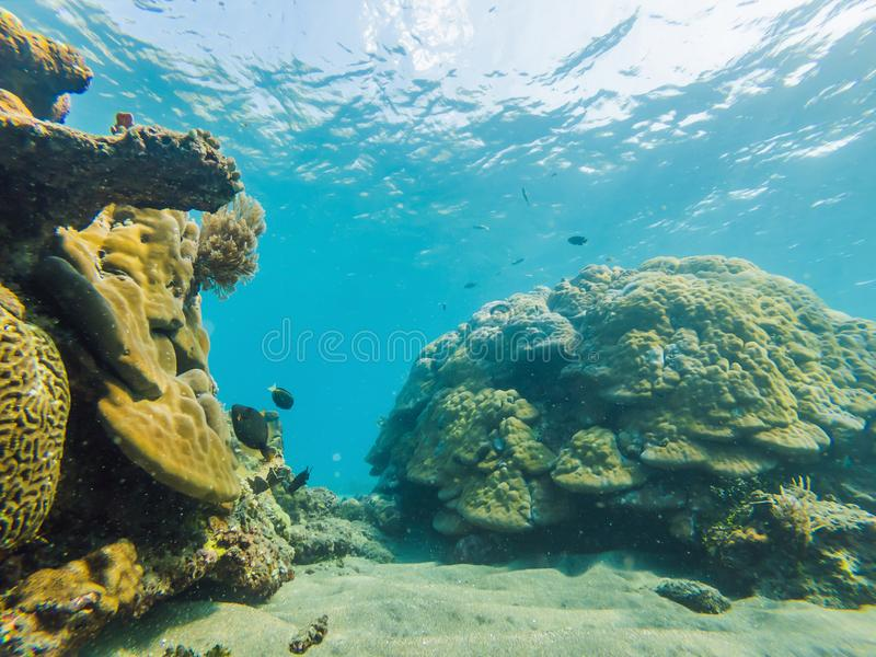Underwater life landscape. Fish shoal at coral reef ocean underwater stock photos
