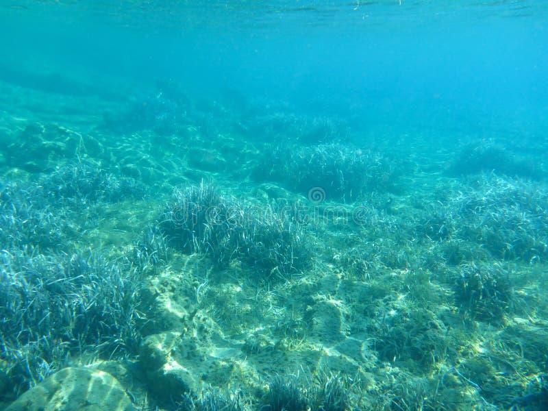 Underwater life - water plants in Kolona double bay Kythnos island Cyclades Greece, Aegean sea. royalty free stock image