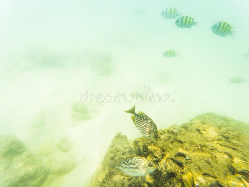 Underwater marine life on coral reefs. Animal, aquarium, aquatic, australia, background, blue, bottom, caribbean, caribic, colony, colorful, decoration, deep royalty free stock image