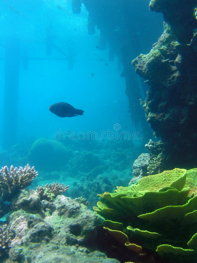 Underwater mystery stock photo