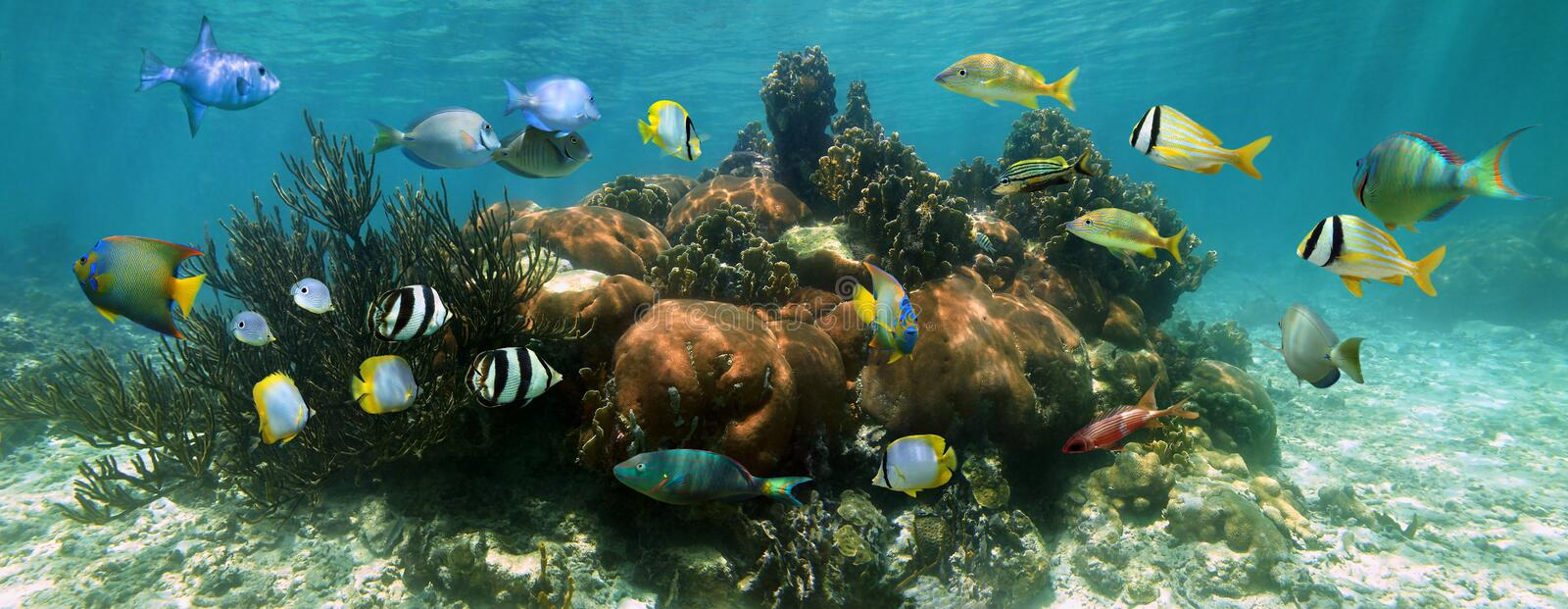 Underwater panorama in a coral reef royalty free stock image