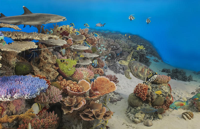 Underwater panorama of a tropical reef with a shark and a turtle.  royalty free stock photography