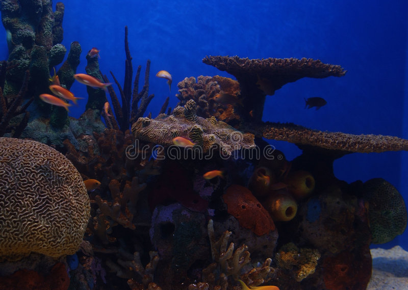 Underwater Paradise stock photos