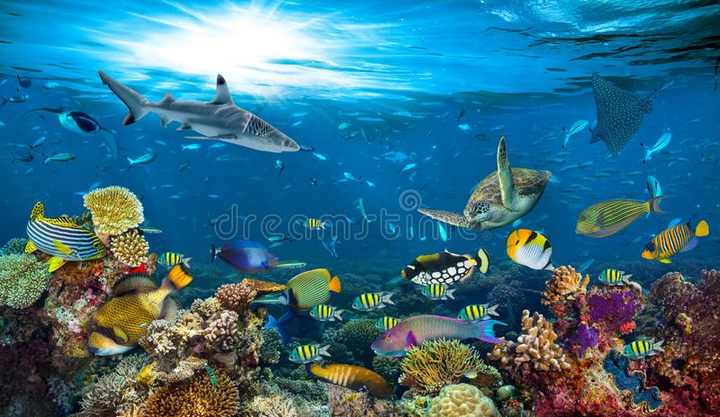 Underwater paradise coral reef colorful fish background stock photo
