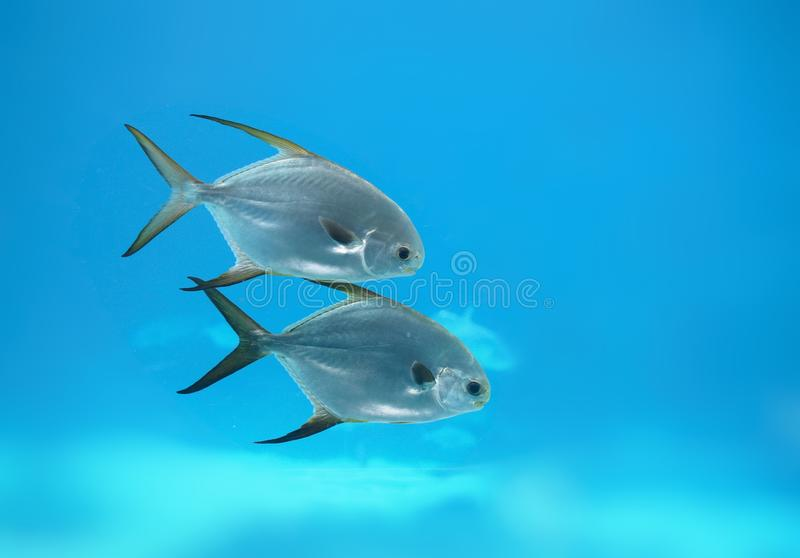 2 of a kind under the sea stock photography