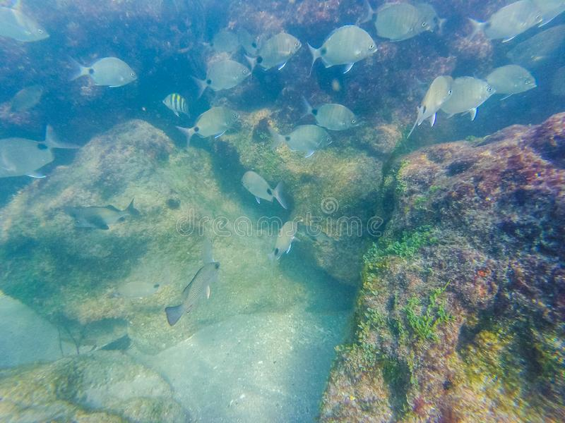 Snorkeling at a coral reef stock images