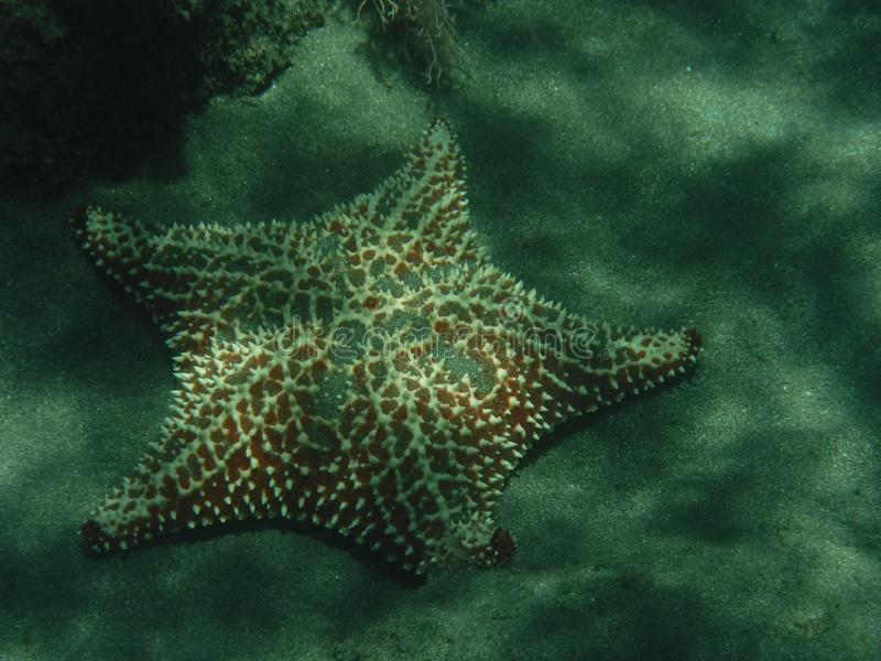 Underwater photo of a starfish royalty free stock images