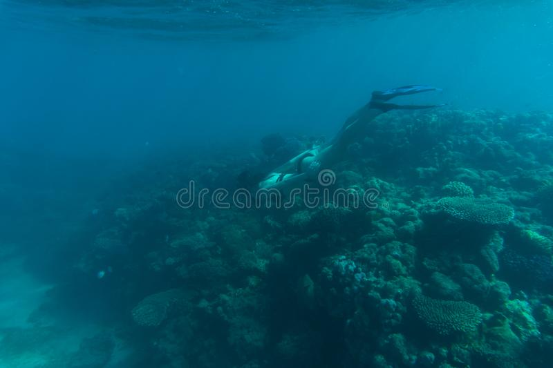 Underwater photo of woman snorkeling and free diving in a clear tropical water at coral reef. Sea underwater. royalty free stock photos