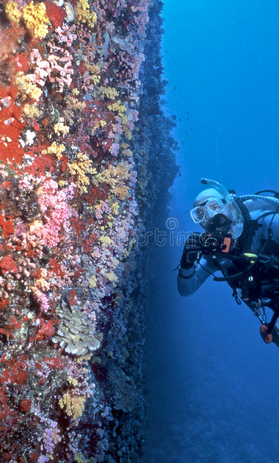 Underwater photographer and fish royalty free stock photo