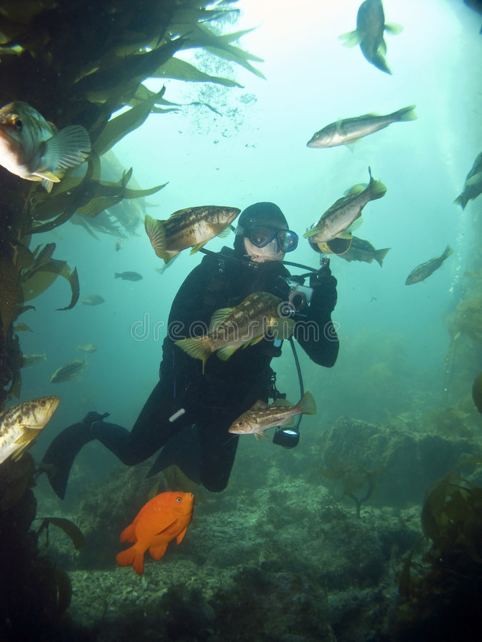 Underwater Photographer surrounded by fish. Looking into each others eyes in Catalina royalty free stock photography