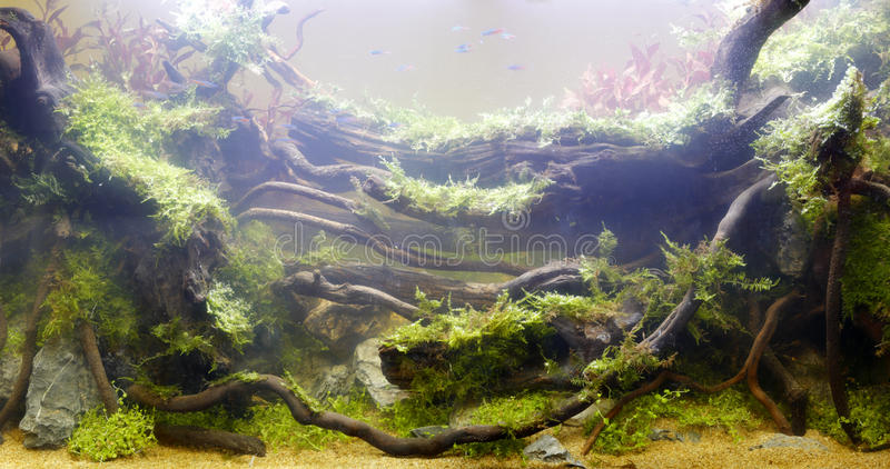 The underwater plant. Underwater world. there are water plants, dead wood and stone stock images
