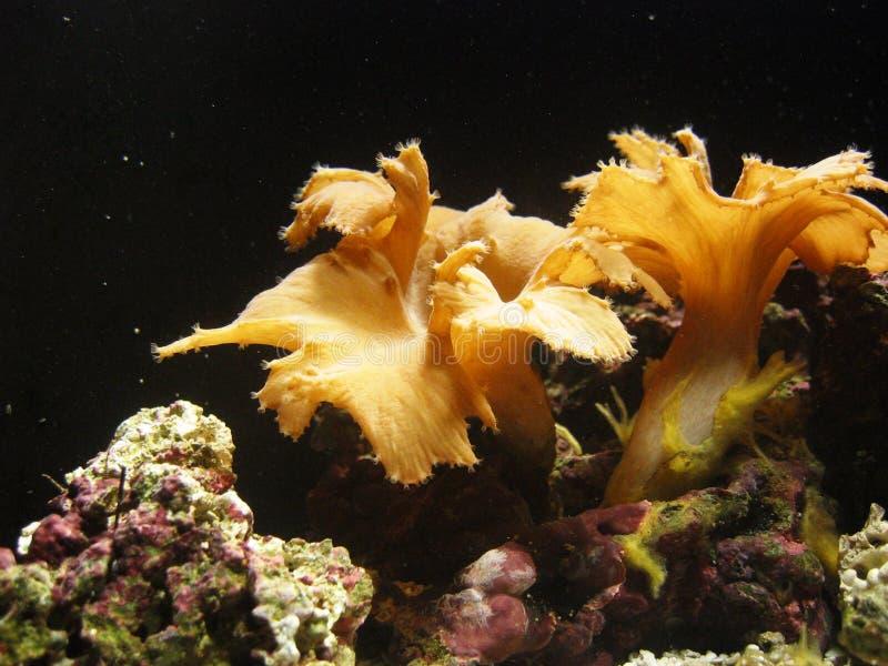 Underwater_Plants imagens de stock royalty free