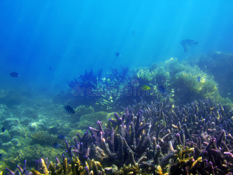 Underwater Reef Scene. Underwater ocean background with corals in the Great Barrier Reef