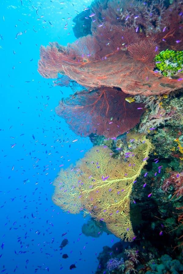 Underwater Reefscape stock photos