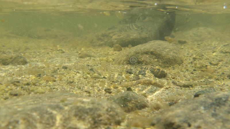 Underwater in a river royalty free stock image
