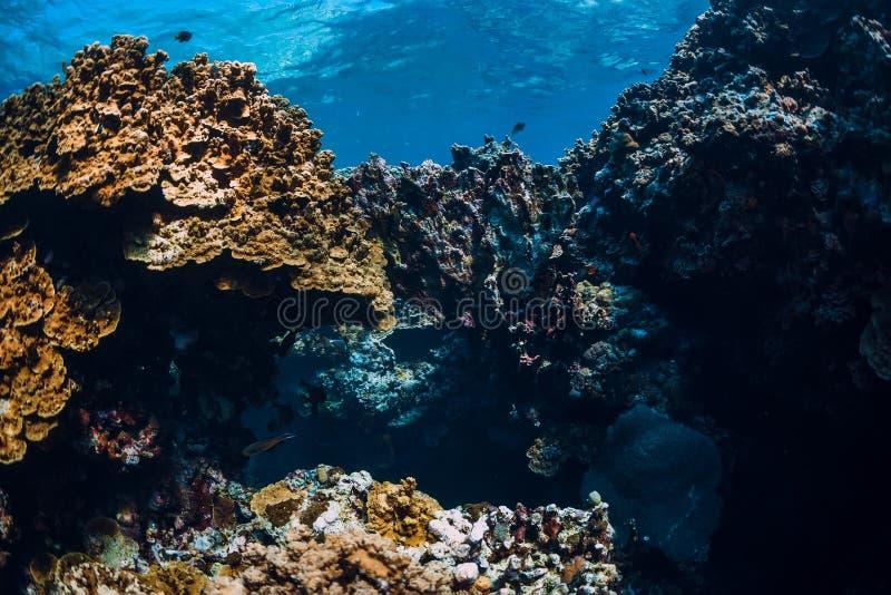 Underwater rocks with coral reef in ocean. Menjangan island, Bali. Underwater rocks with coral reef in ocean. Menjangan island stock photography