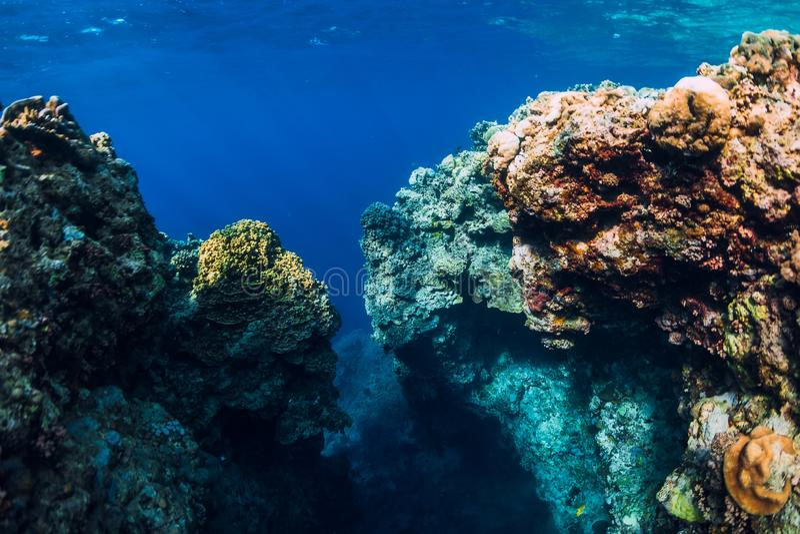 Underwater rocks with corals in ocean. Menjangan island, Bali. Underwater rocks with corals in ocean. Menjangan island royalty free stock image