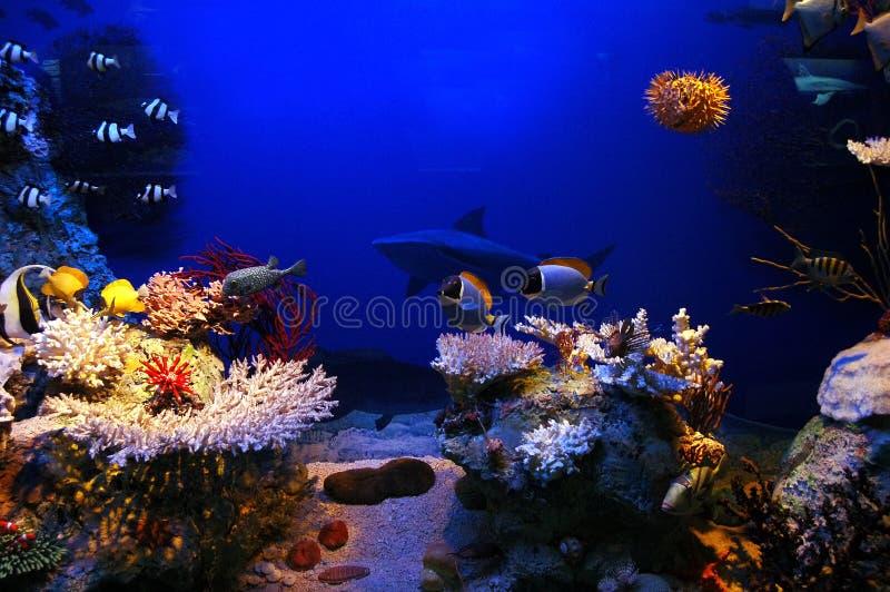 Underwater scene. Underwater background - fishes and coral