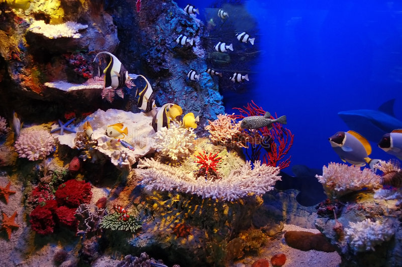Underwater scene. Underwater background - fishes and coral
