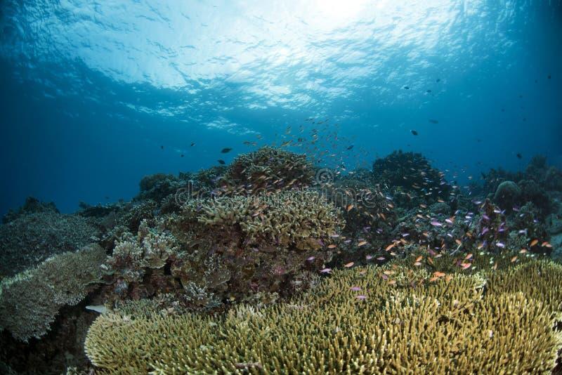 Underwater Scene with blue background stock image